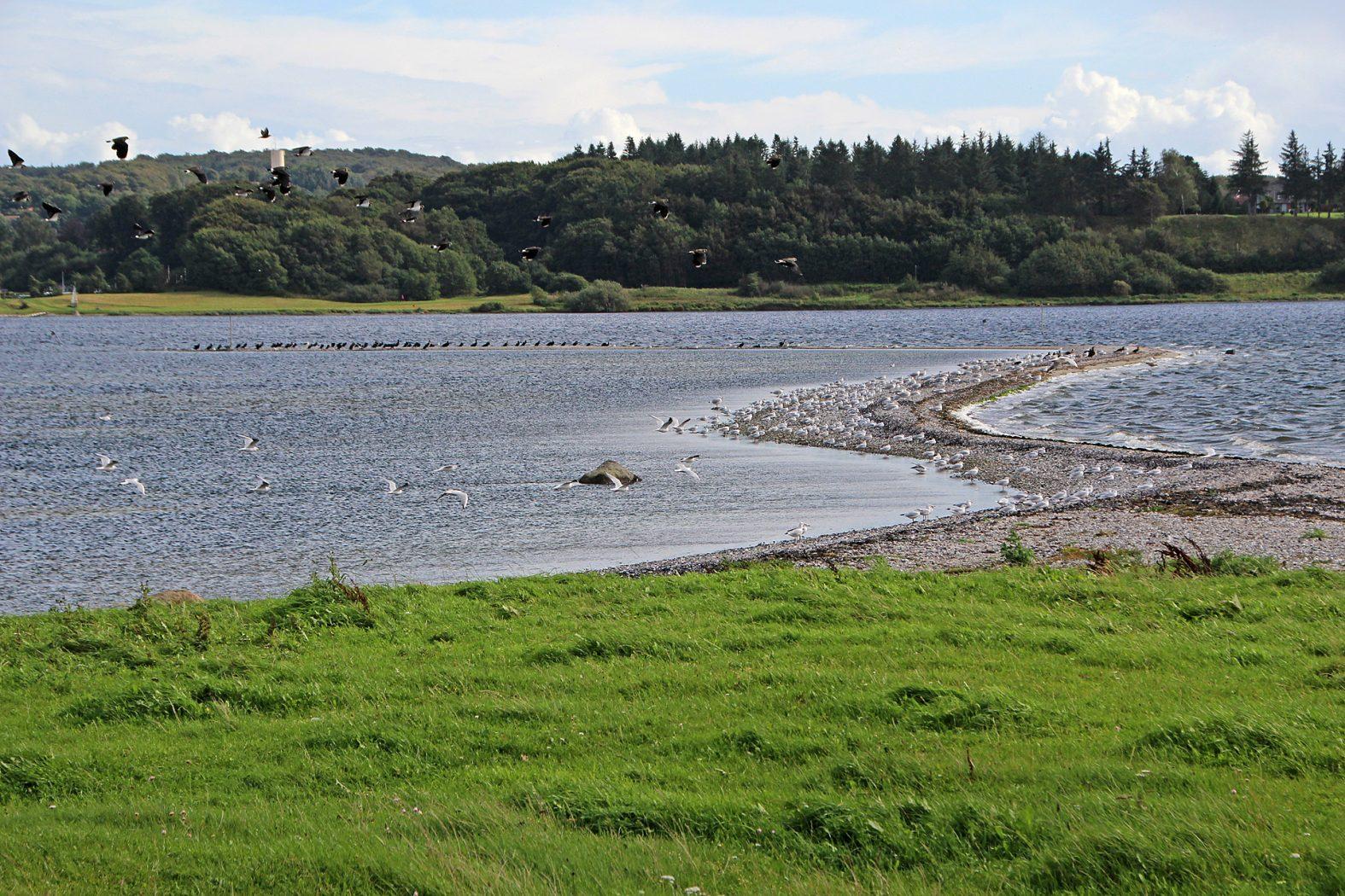 Meerforellenplatz Langsodde am Mariagerfjord