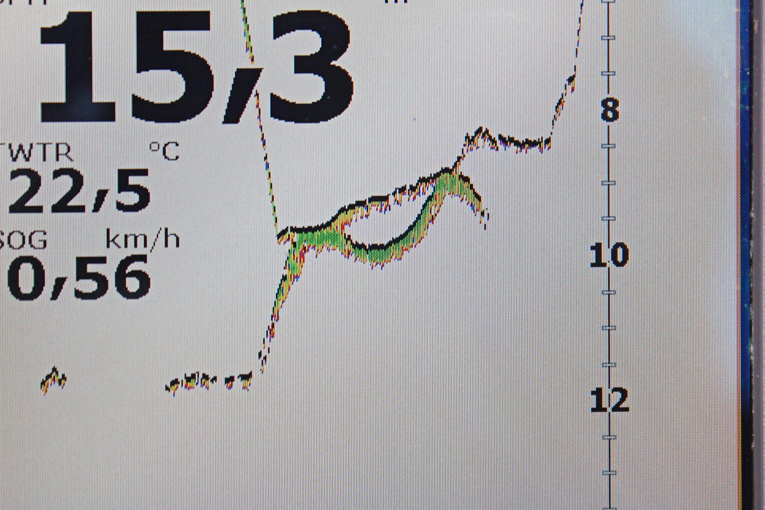 Pelagisch angeln auf Zander
