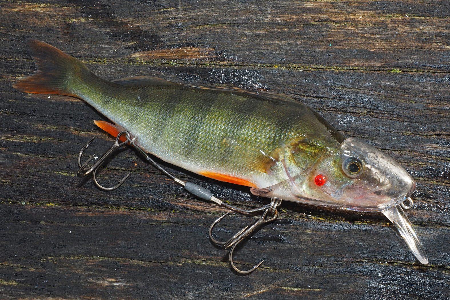Angeln mit Köderfischsystem