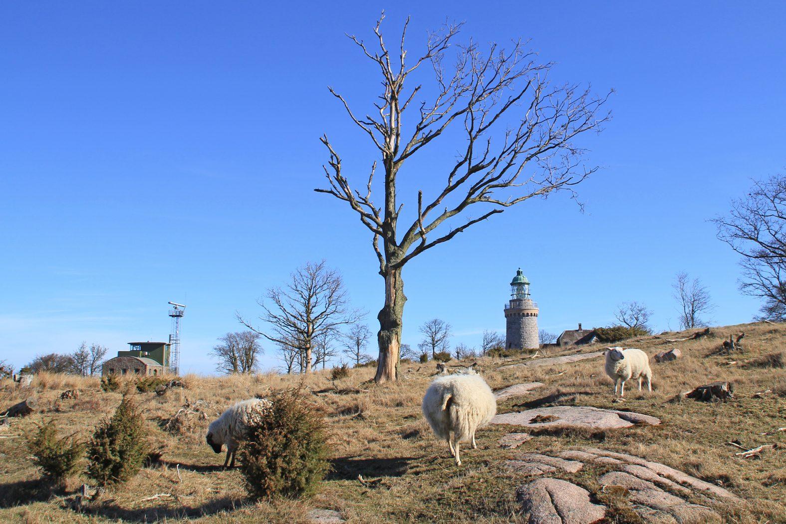 Landschaft Hammeren auf Bornholm