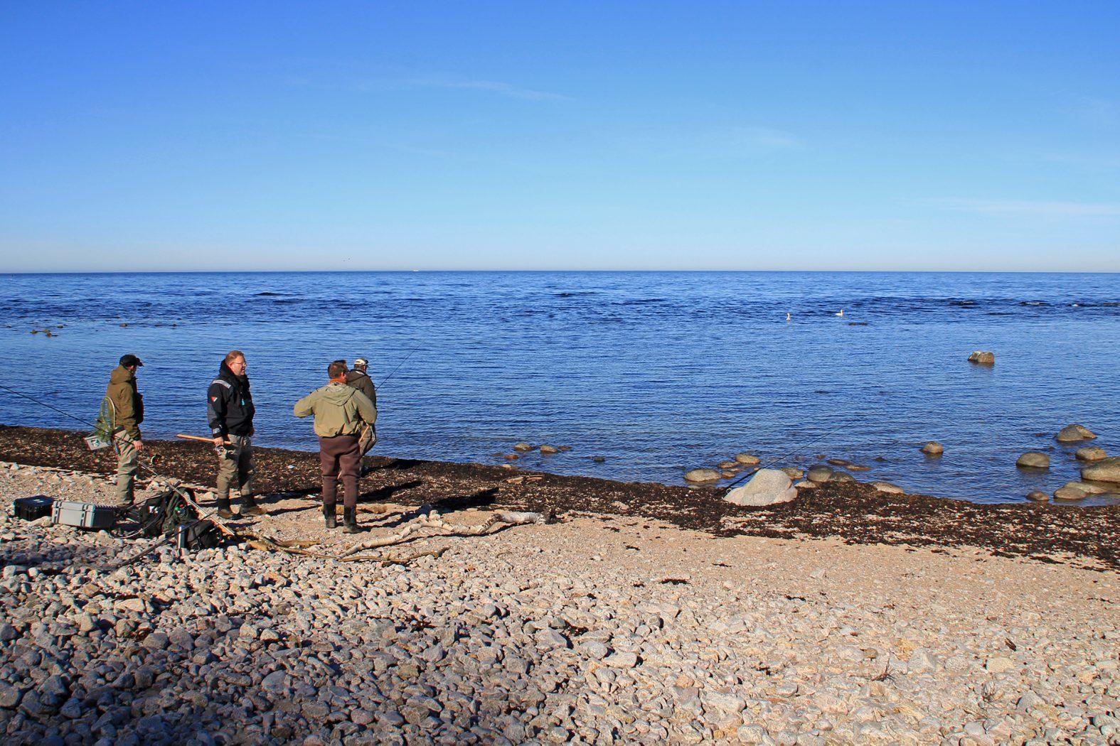 Meerforellenangeln bei Røsted auf Bornholm