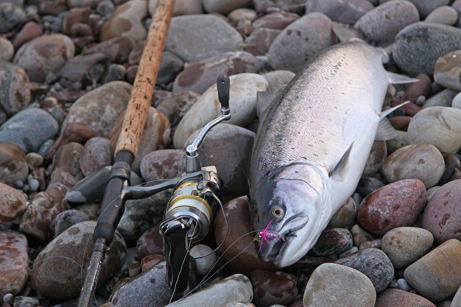 Meerforellen angeln mit Sbirolino auf Bornholm