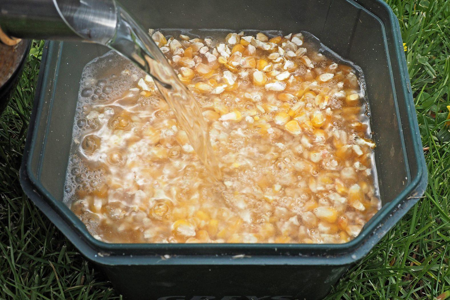 Mais kochen zum Angeln