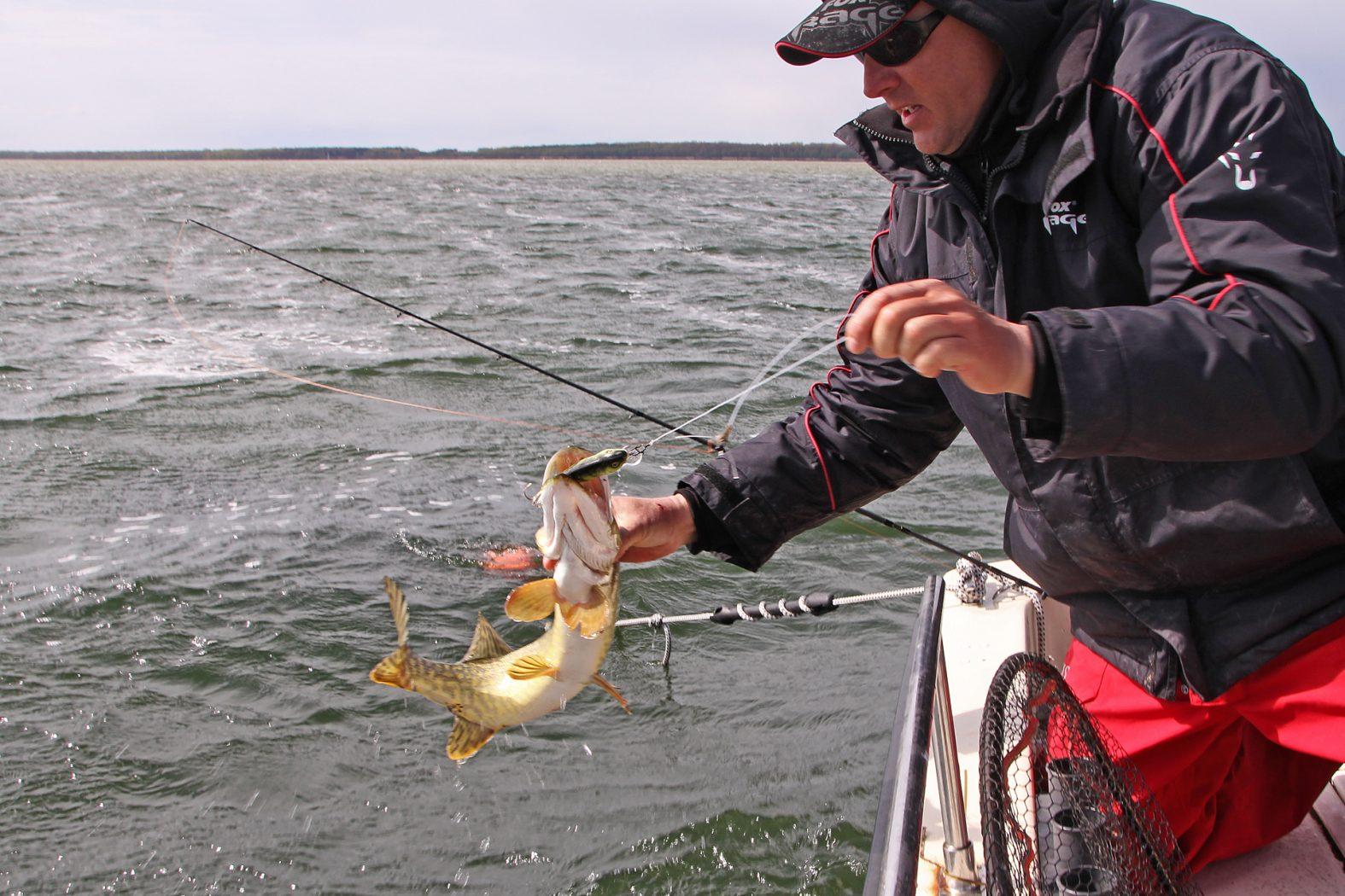 Hecht angeln in den Bodden auf Rügen