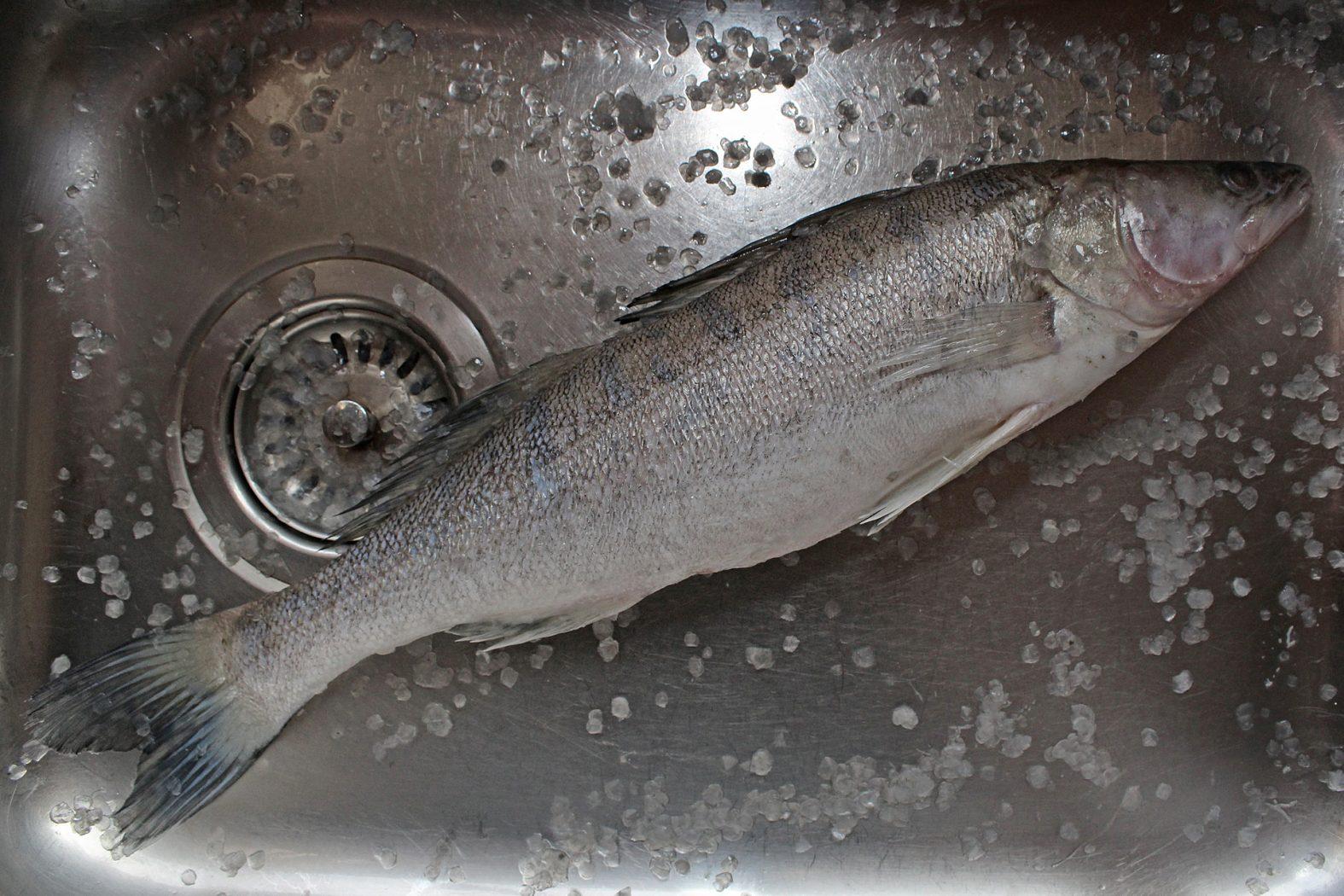 Fisch entschuppen Anleitung