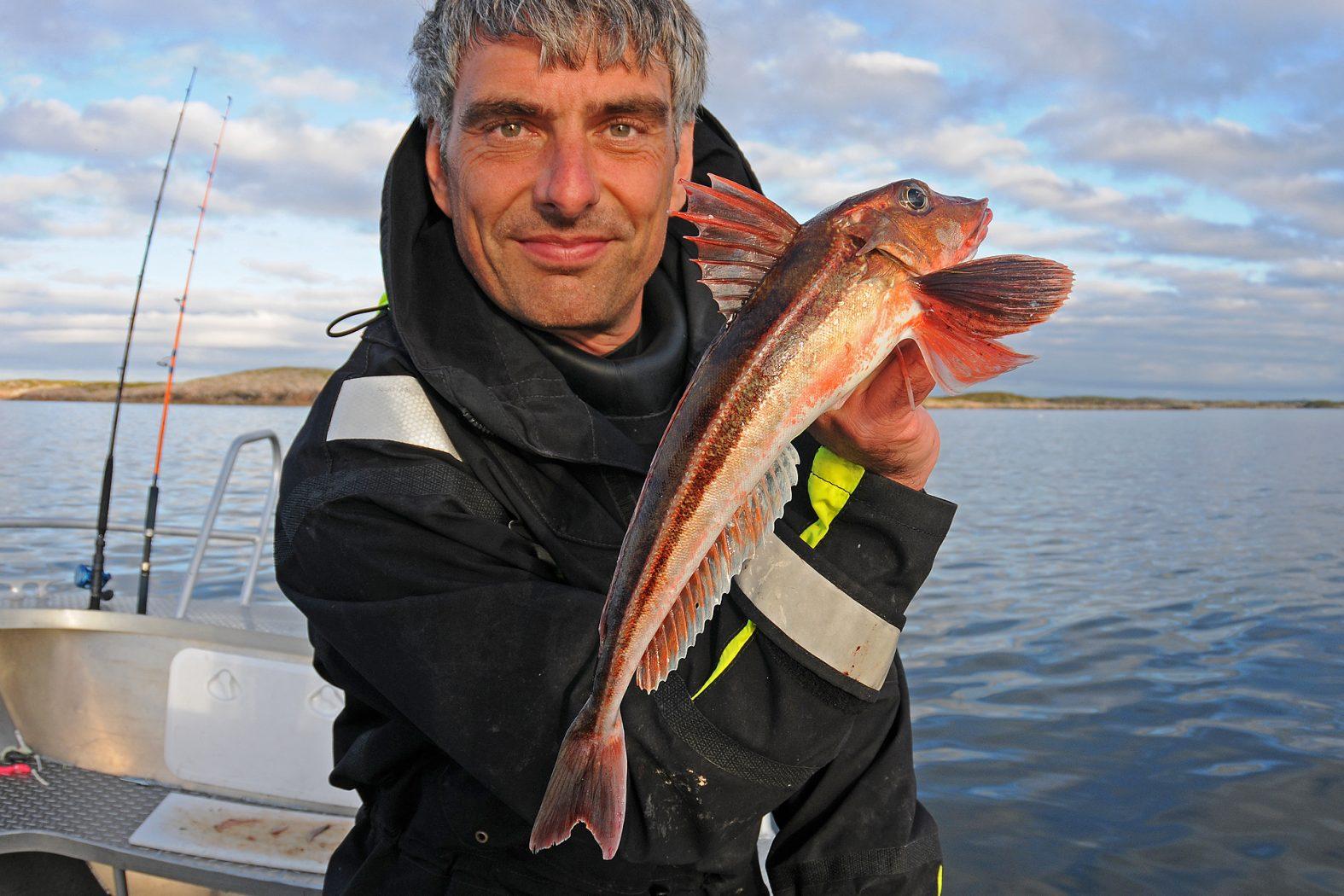 Knurrhahn angeln in Norwegen