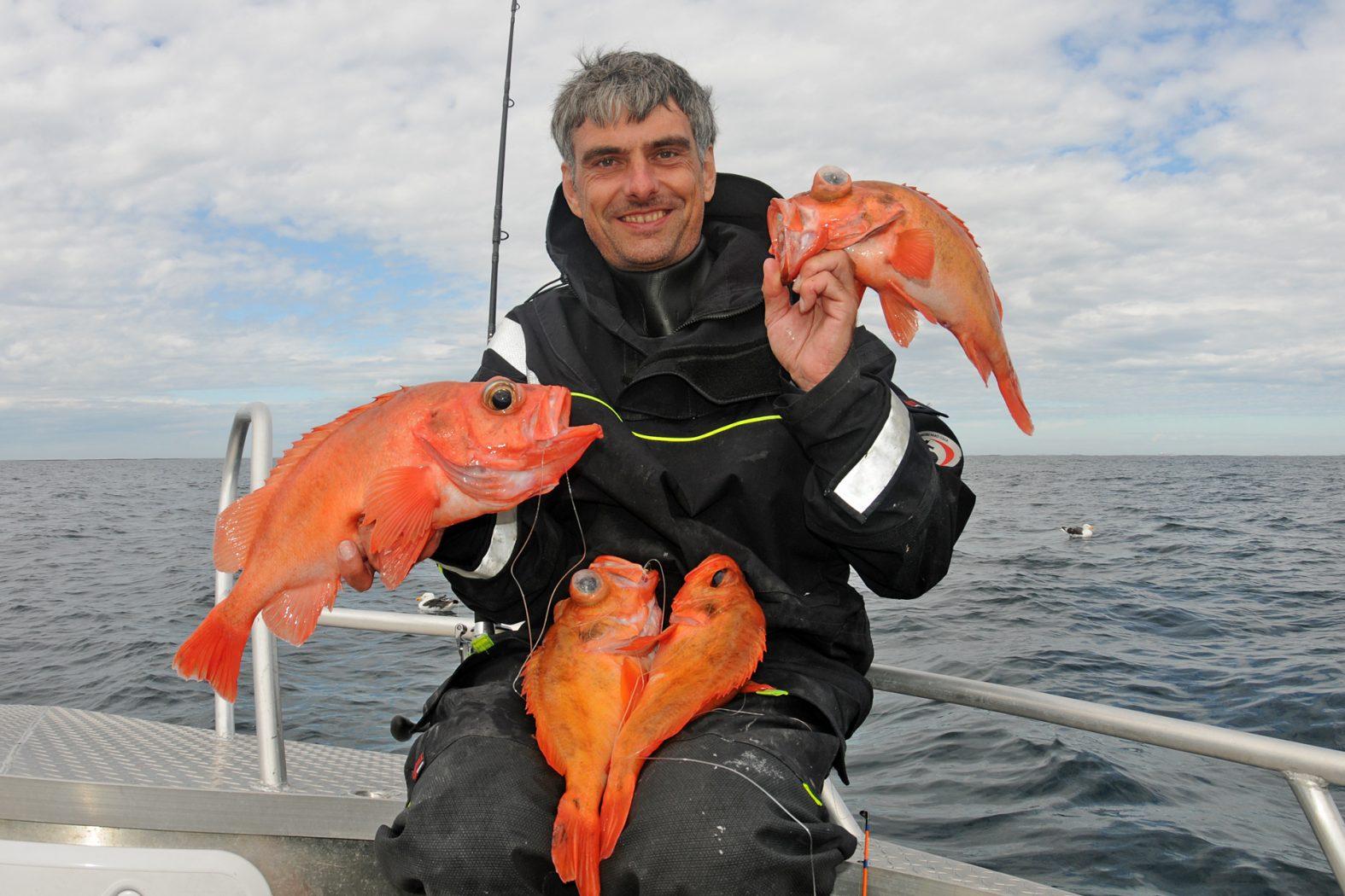 Rotbarsch angeln vor Hitra
