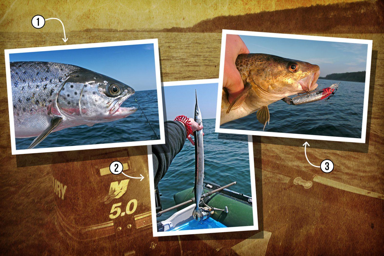 Meerforelle, Hornhecht und Dorsch angeln vor Fehmarn