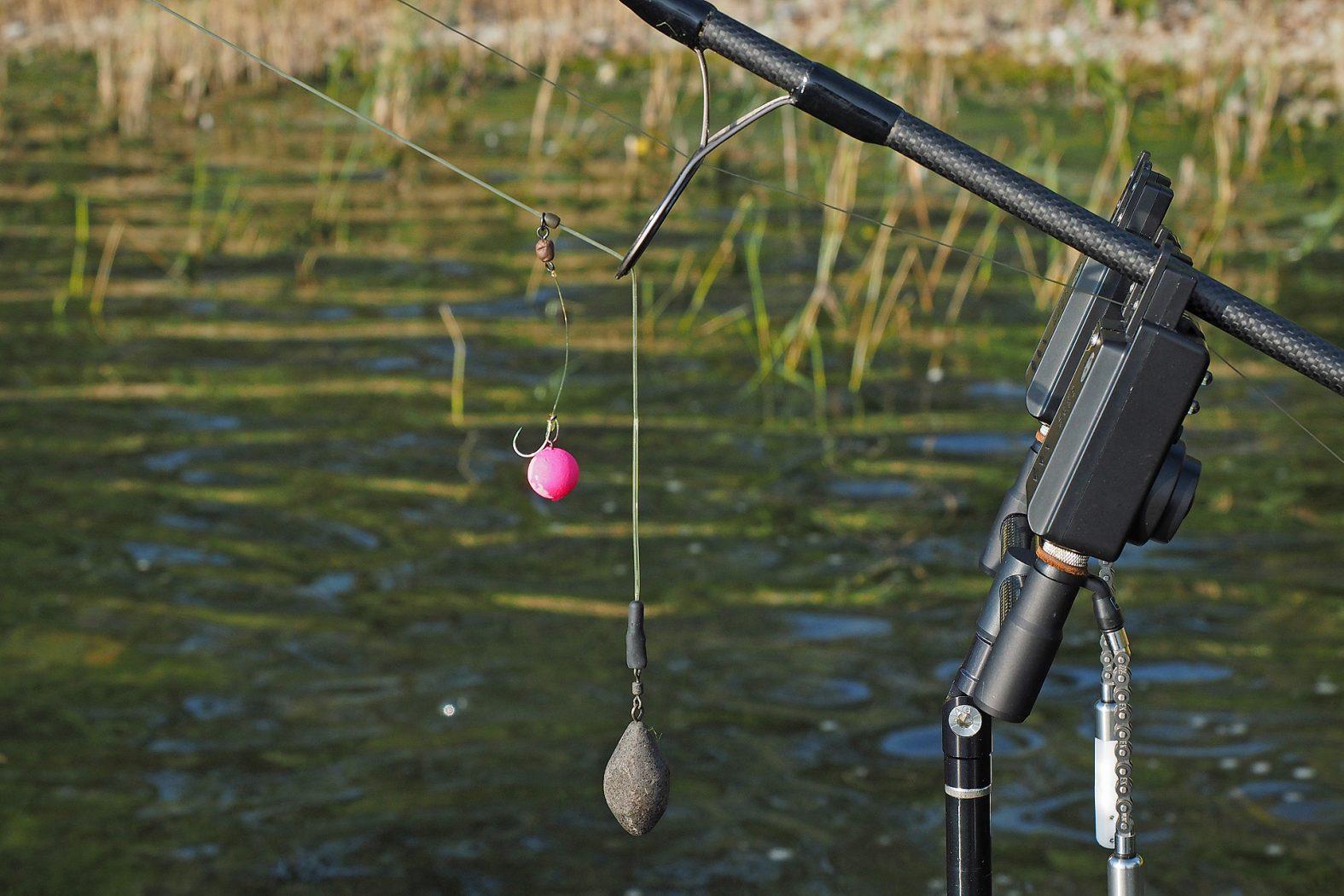Tipps zum Karpfenfischen im Frühling