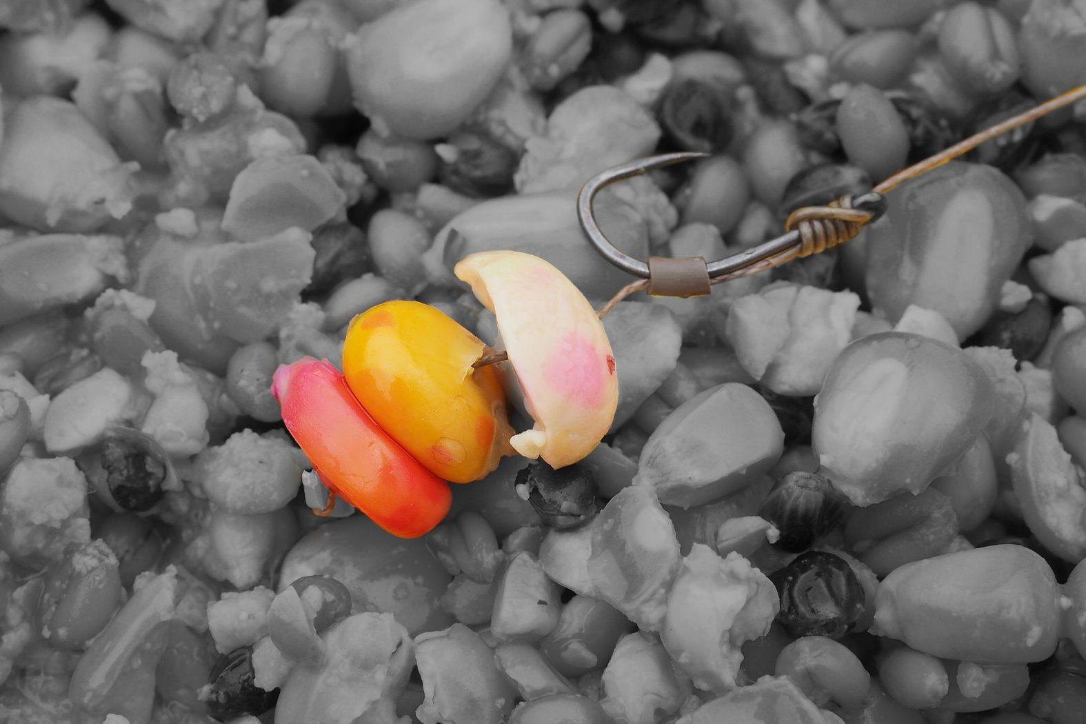 Karpfenköder Frühjahr