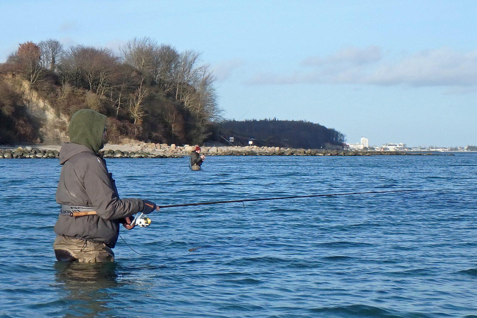 Fangzeit Meerforelle