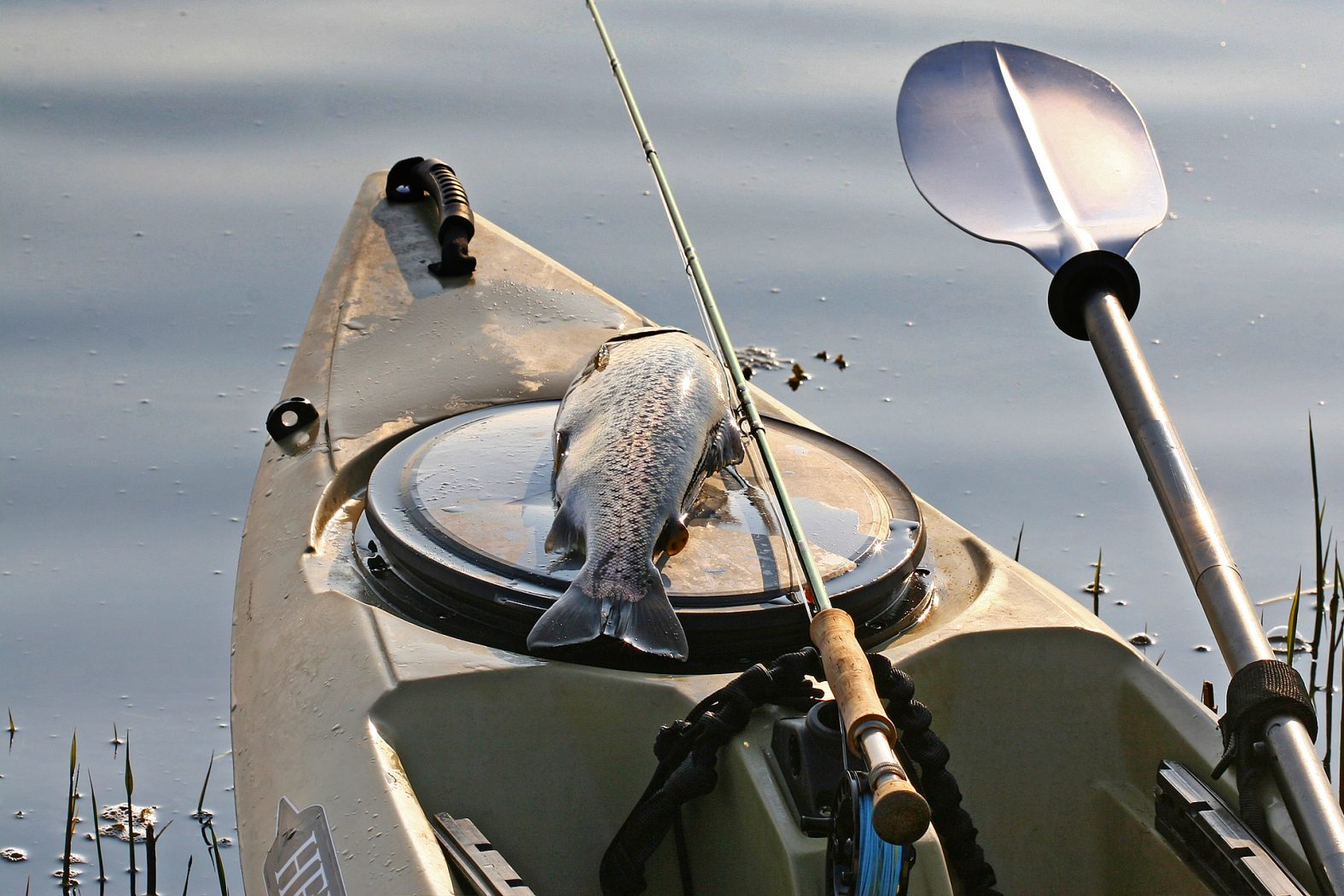 Kajak angeln auf Meerforelle