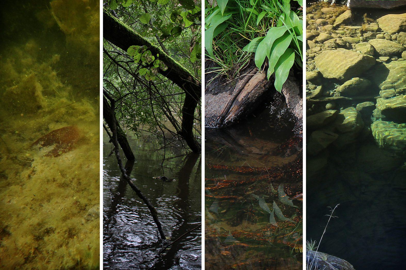 Lebensraum von Flusskrebsen