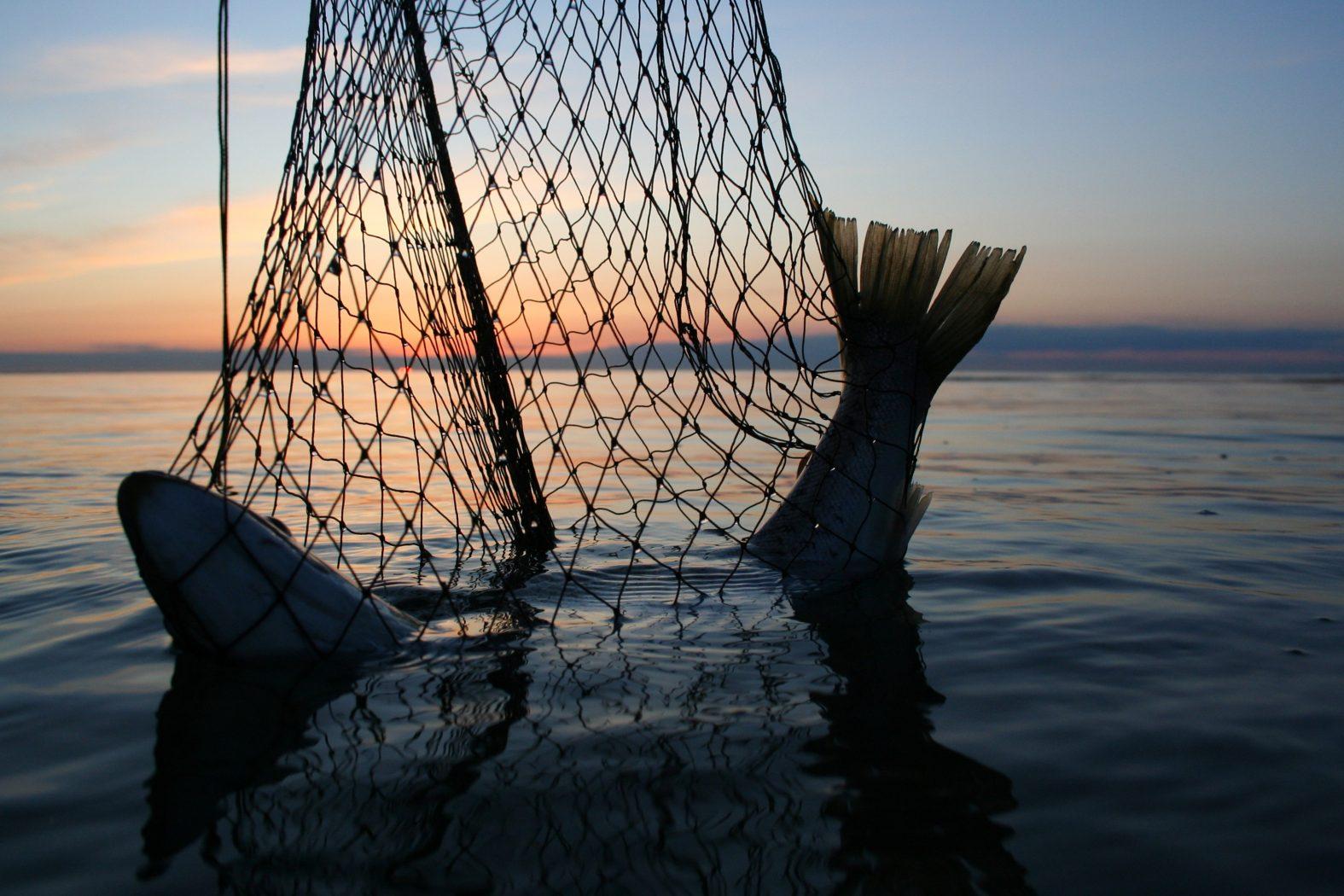 Meerforellen angeln Flensburg
