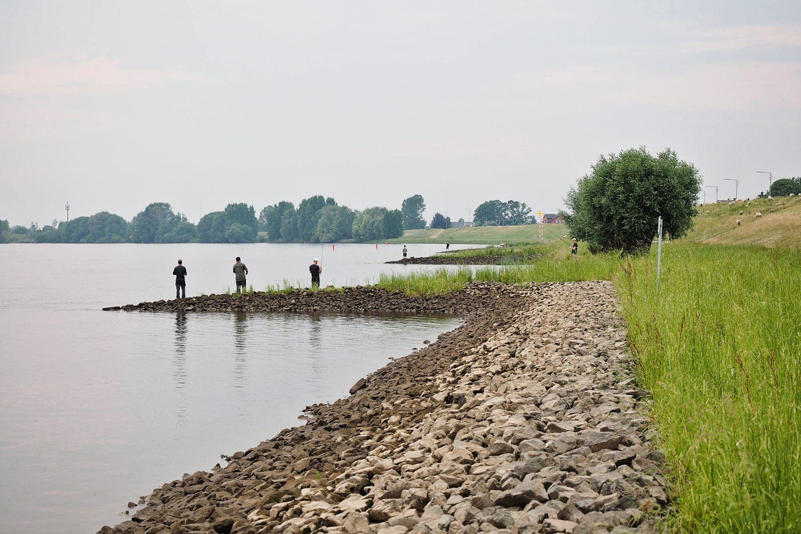 Zanderangeln an der Elbe bei Hamburg