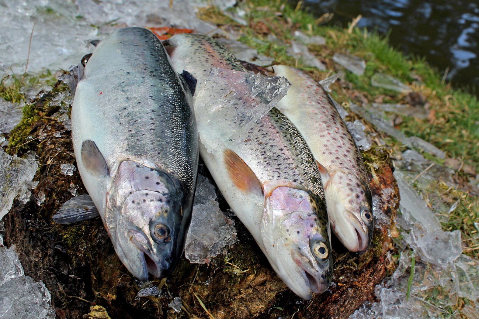 Tipps zum Forellenangeln im Winter