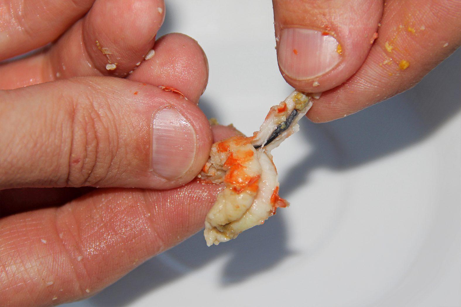 Den Darm bei gekochten Flusskrebsen entfernen