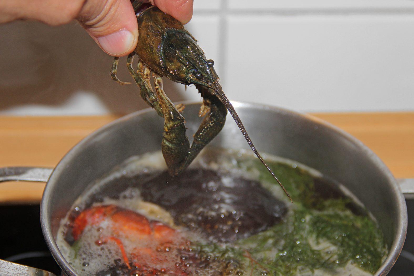 Flusskrebse richtig töten
