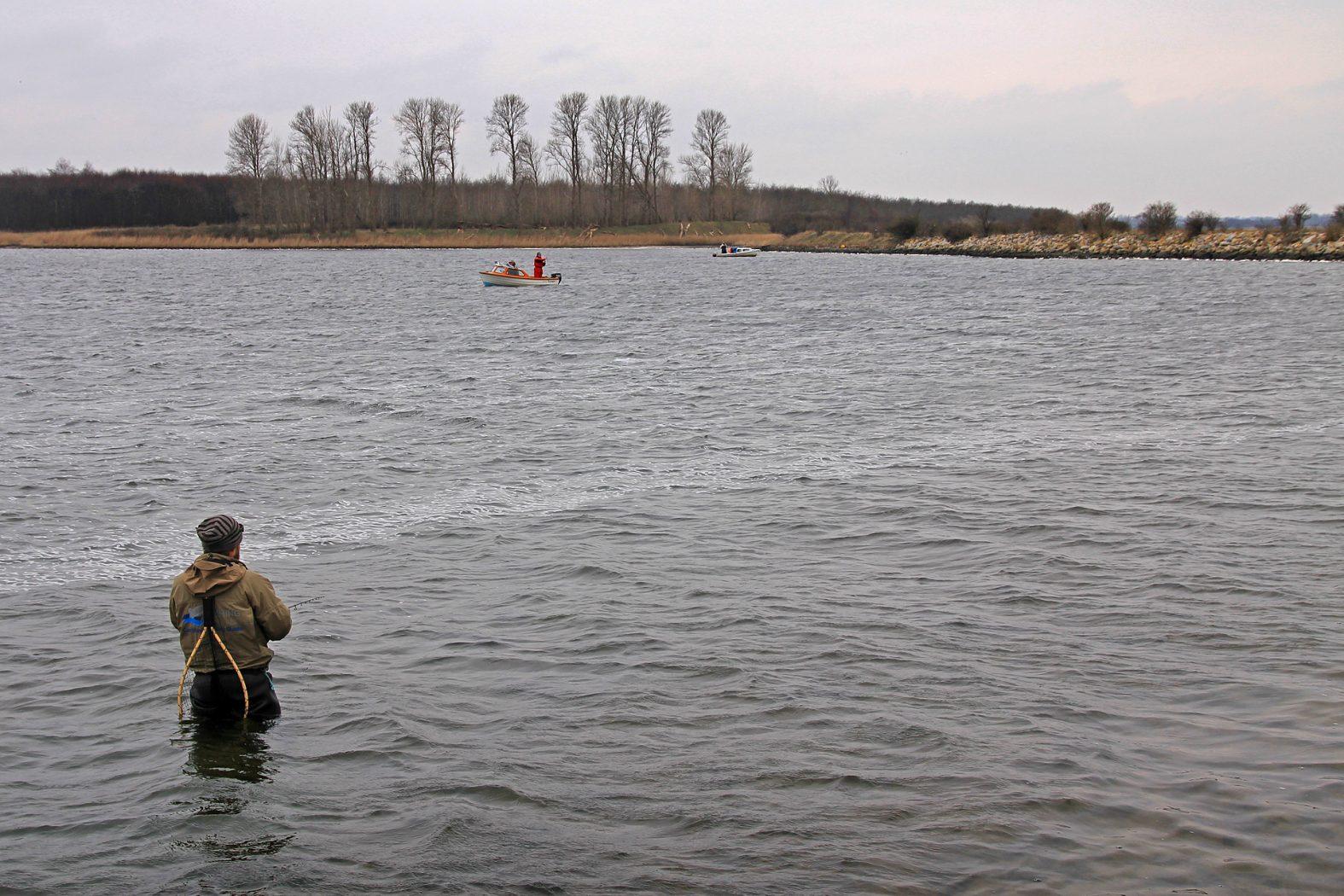 Meerforellen angeln im Odense Fjord