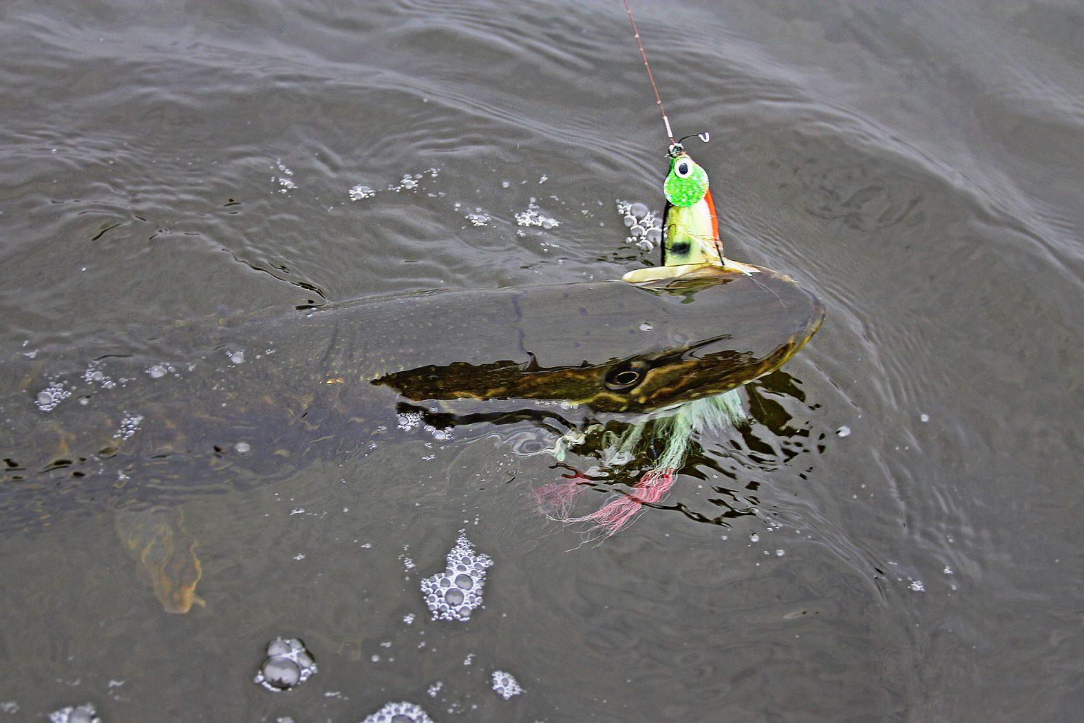 Hecht angeln auf Seeland