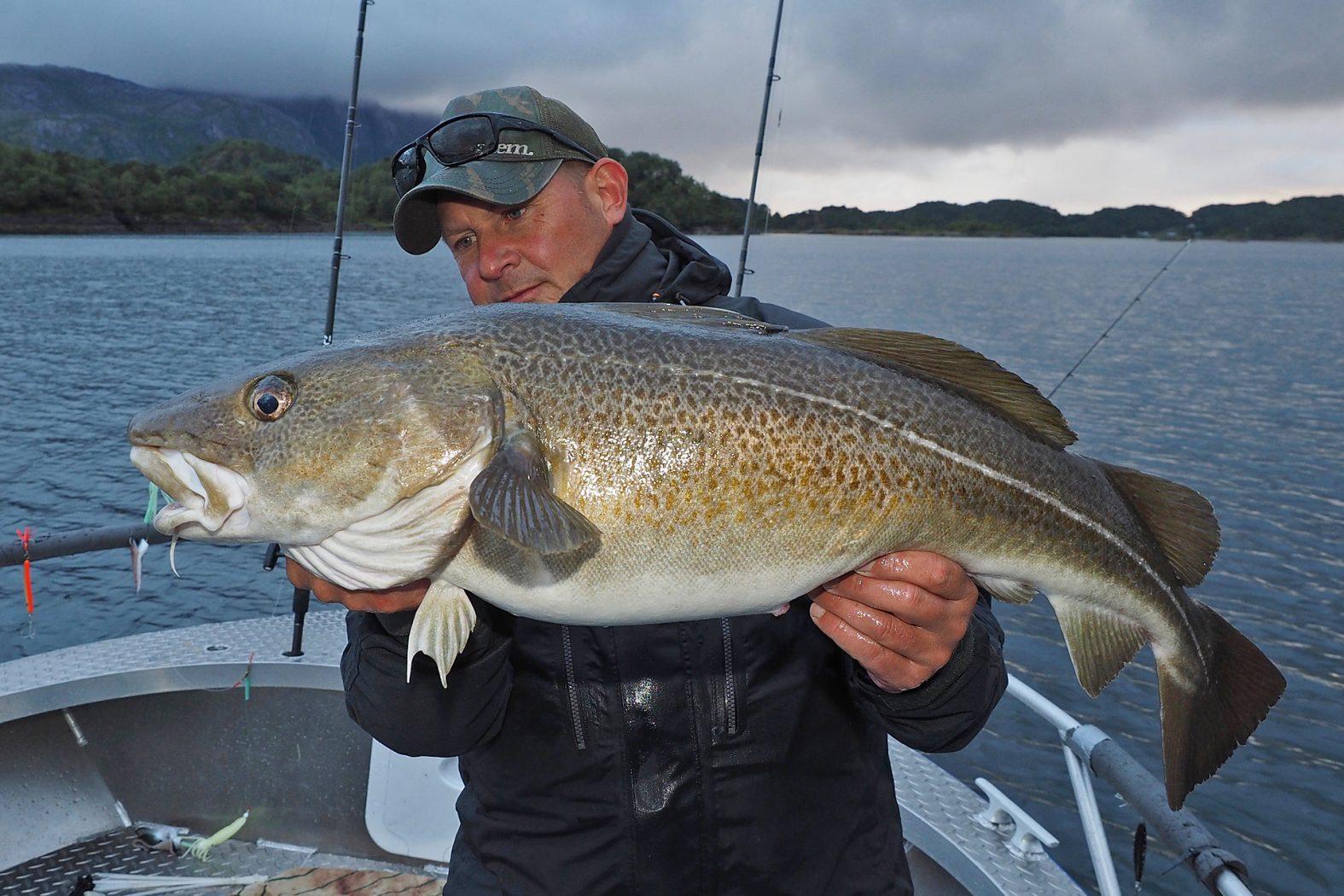 Dorsch angeln in Mittelnorwegen