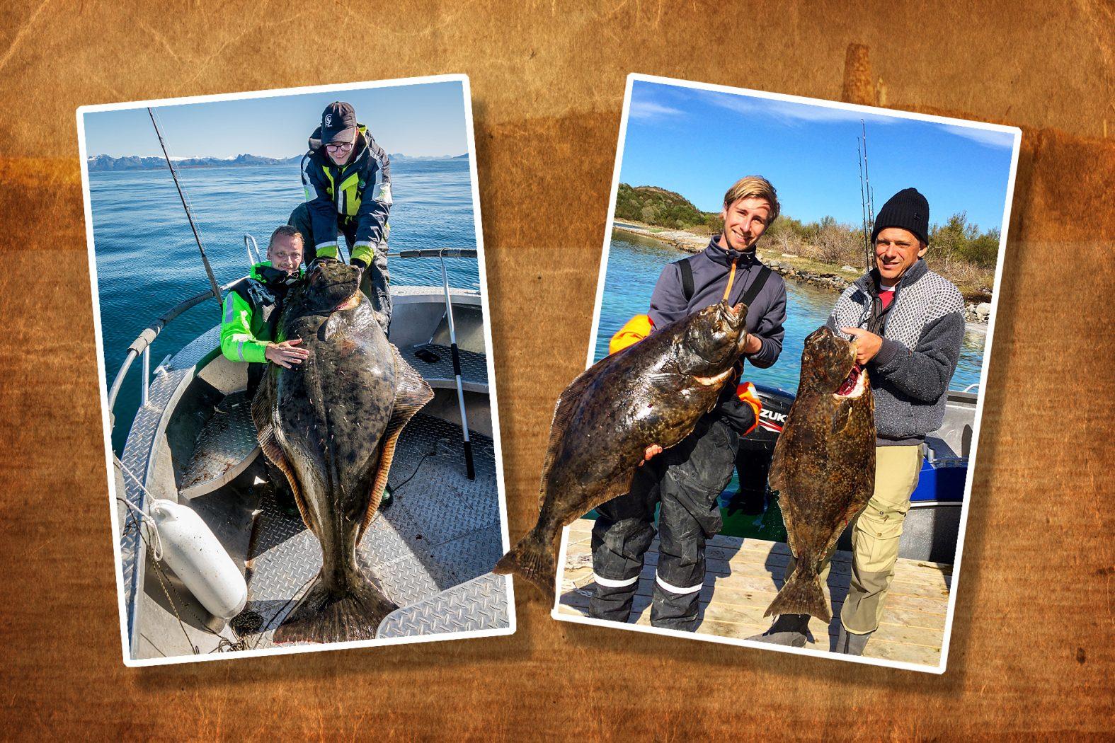 Heilbutt angeln in Mittelnorwegen