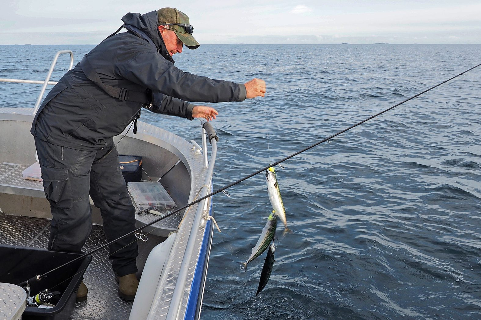 Makrelen angeln in Norwegen