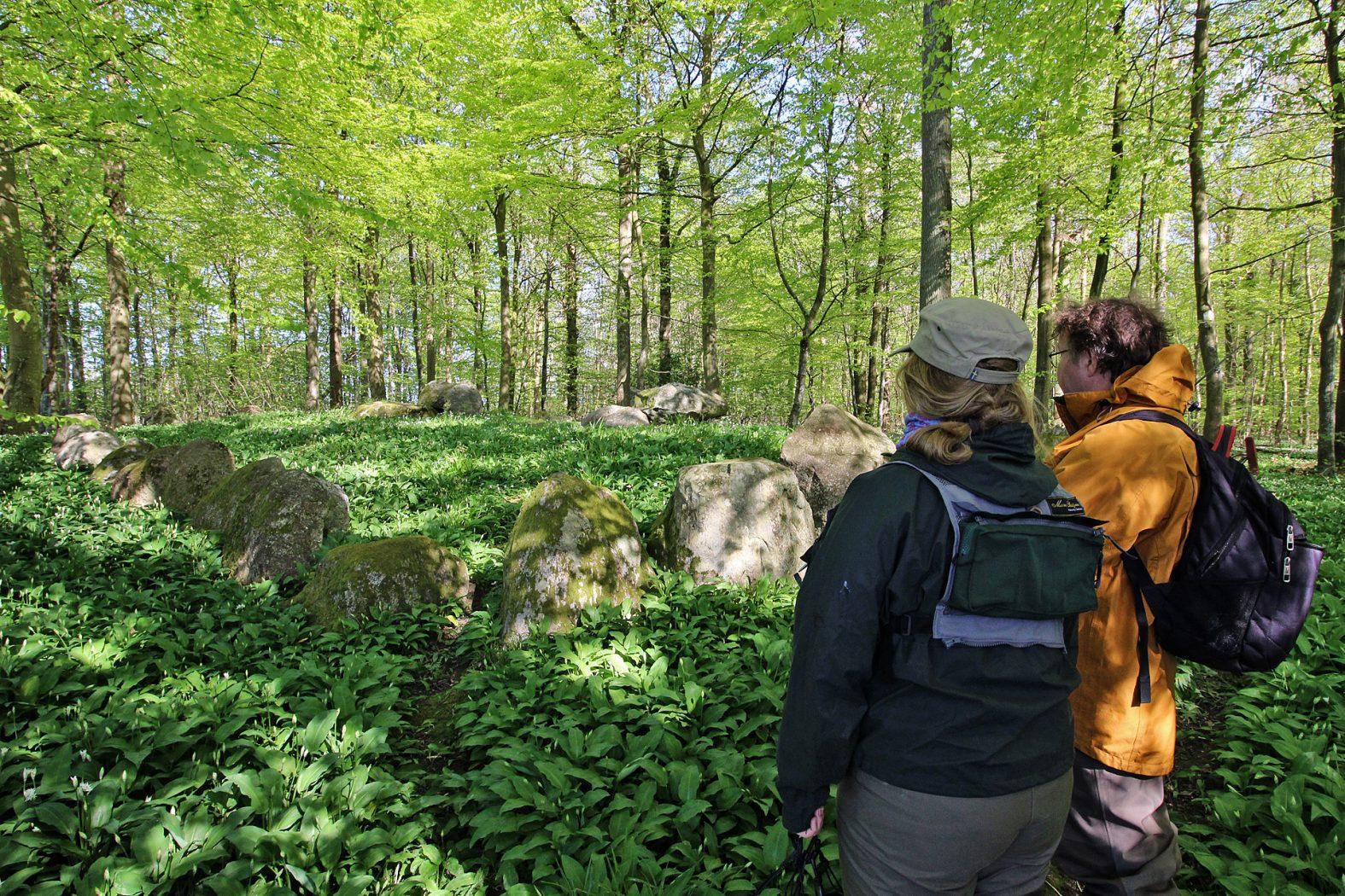 Hünengrab und Bärlauch am Lillebælt