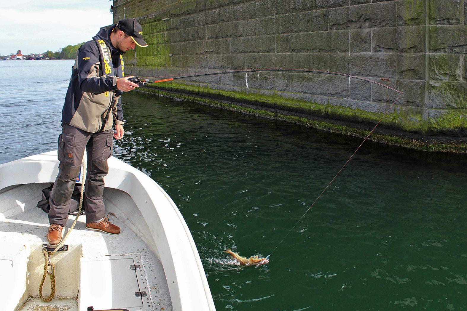 Kleiner Belt Dorsch angeln