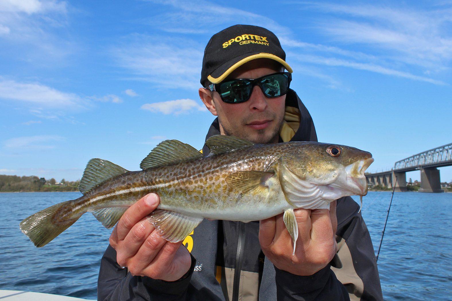 Dorsch angeln Dänemark