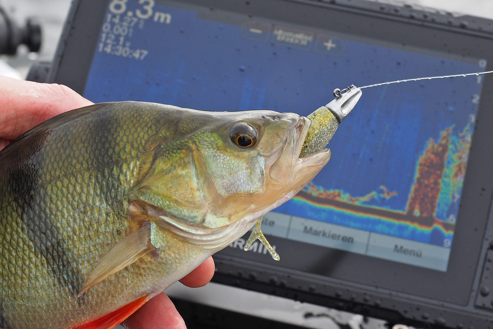Mit Dart Jighead auf Barsch angeln