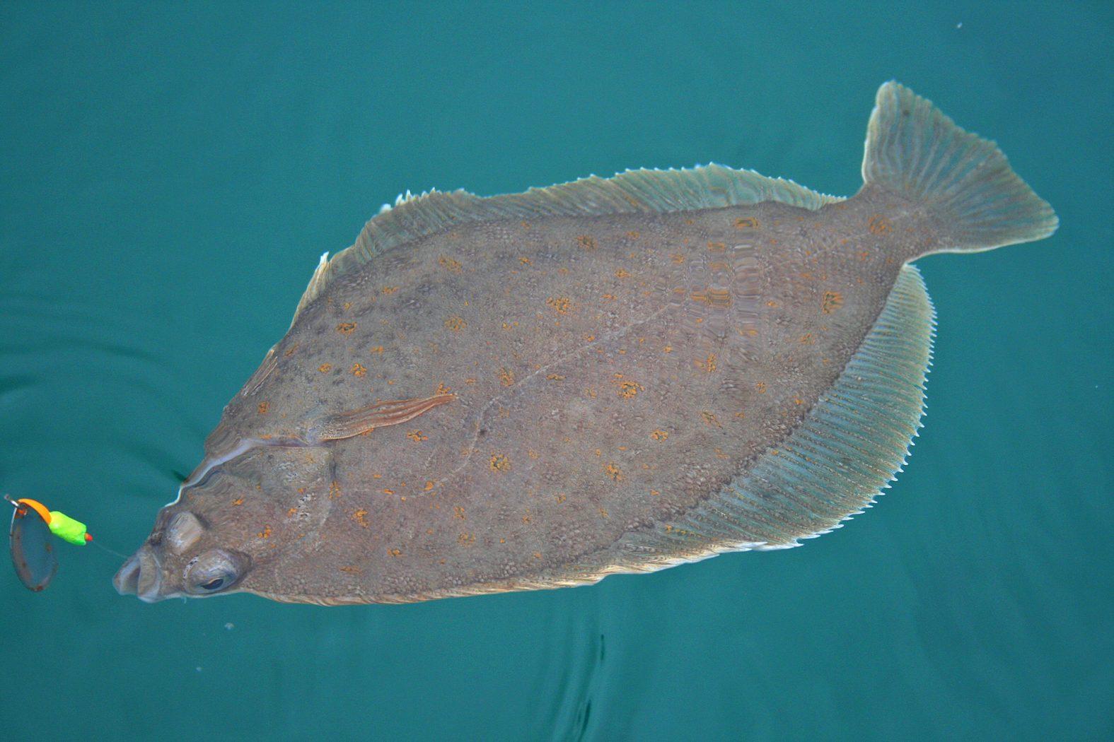 Plattfisch angeln in Südnorwegen