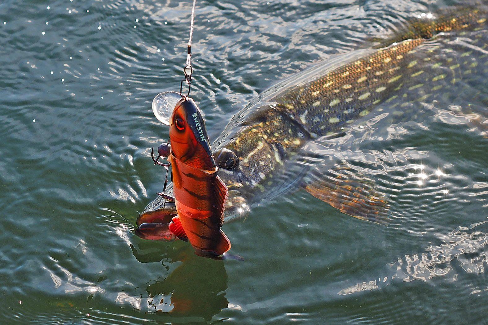 Hecht angeln auf Bornholm