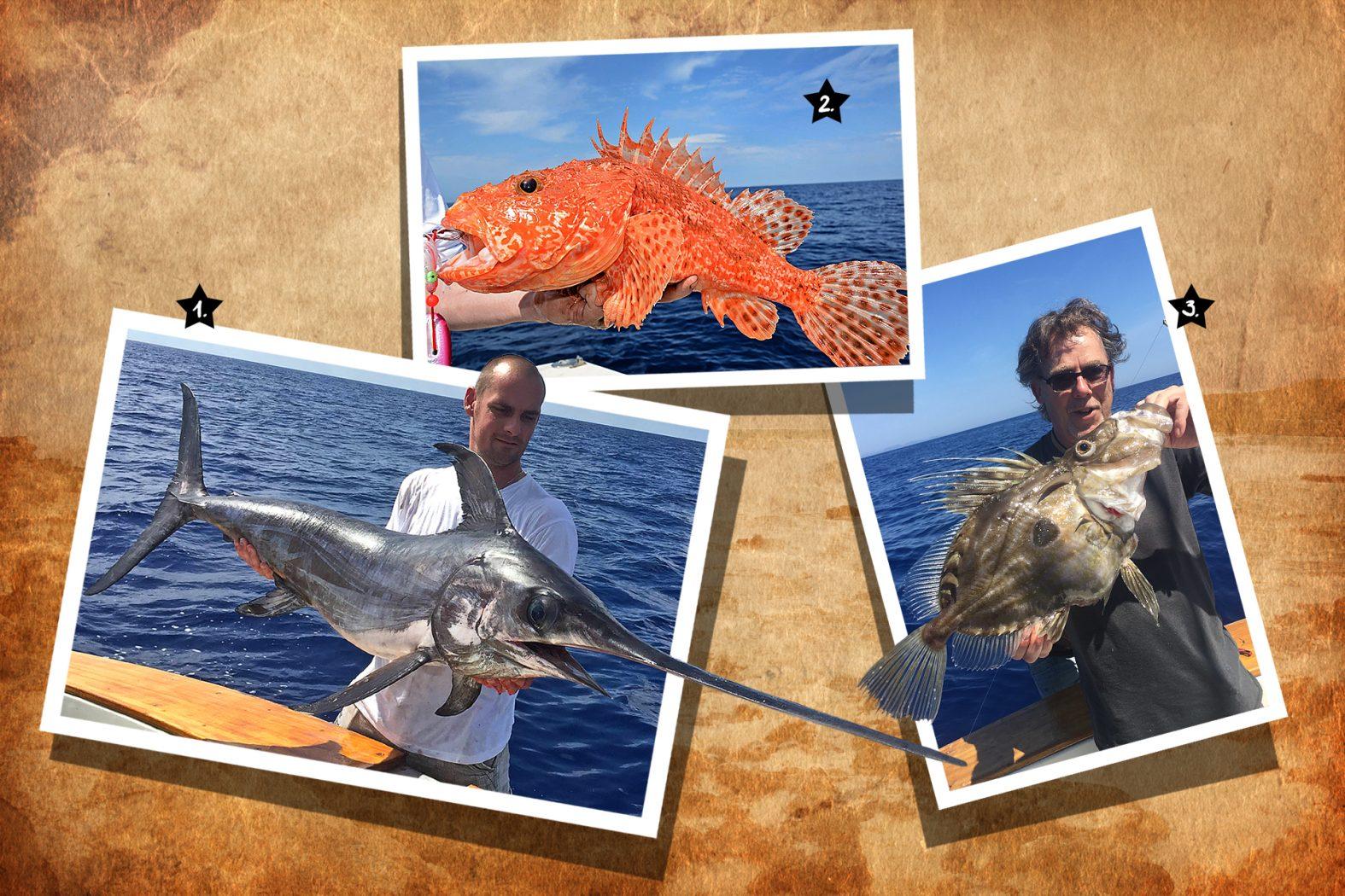 Drachenkopf, Schwertfisch und Heringskönig angeln im Mittelmeer vor Ibiza und Mallorca