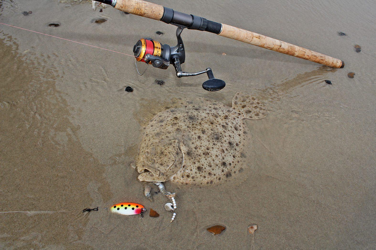 In Dänemark Steinbutt angeln