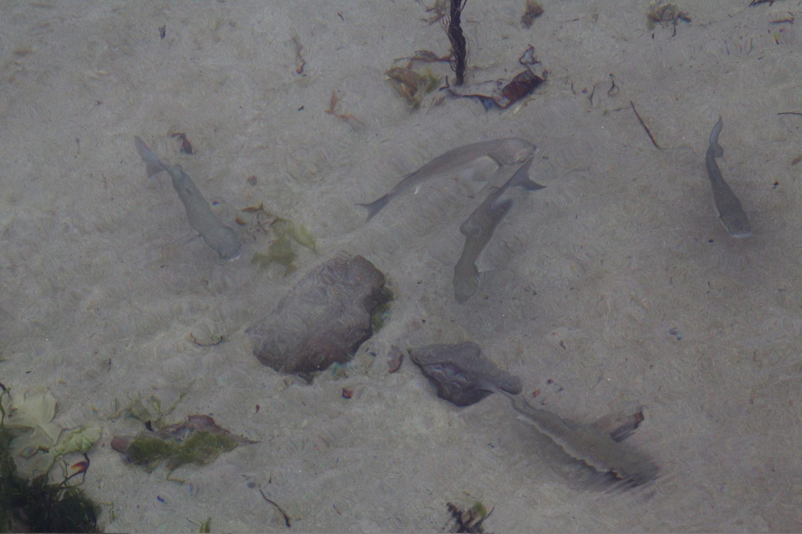 Meeräschen angeln in Irland