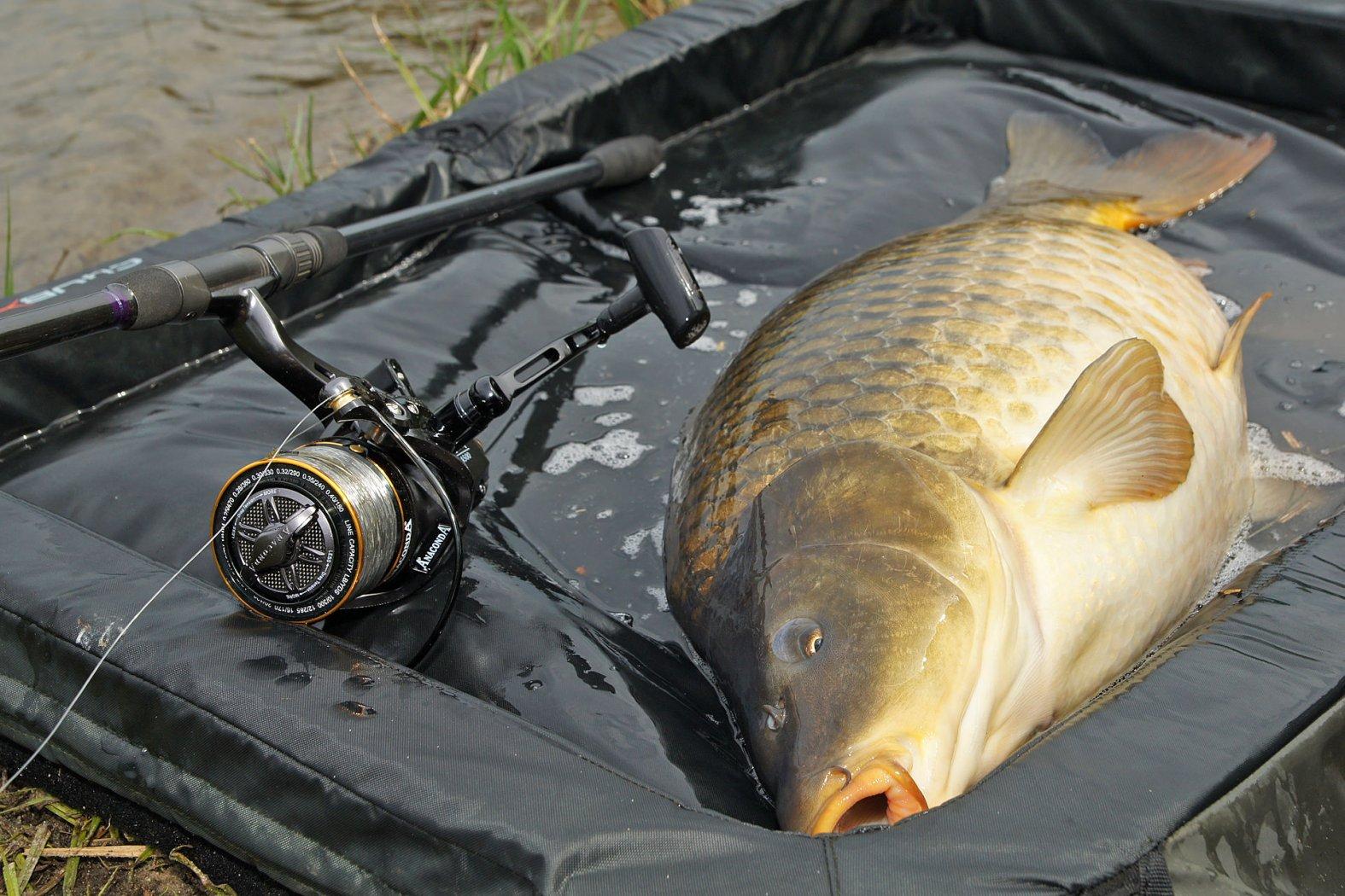 schlagschnur beim karpfen angeln