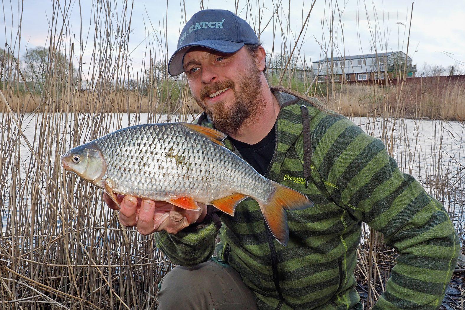 Rotaugen angeln mit Hanf