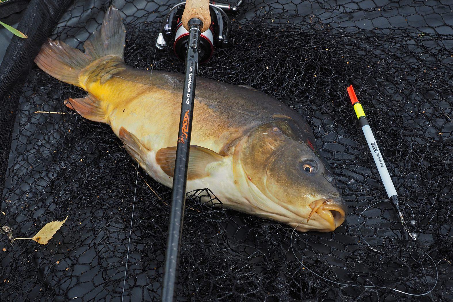 Mit Pose auf Karpfen angeln
