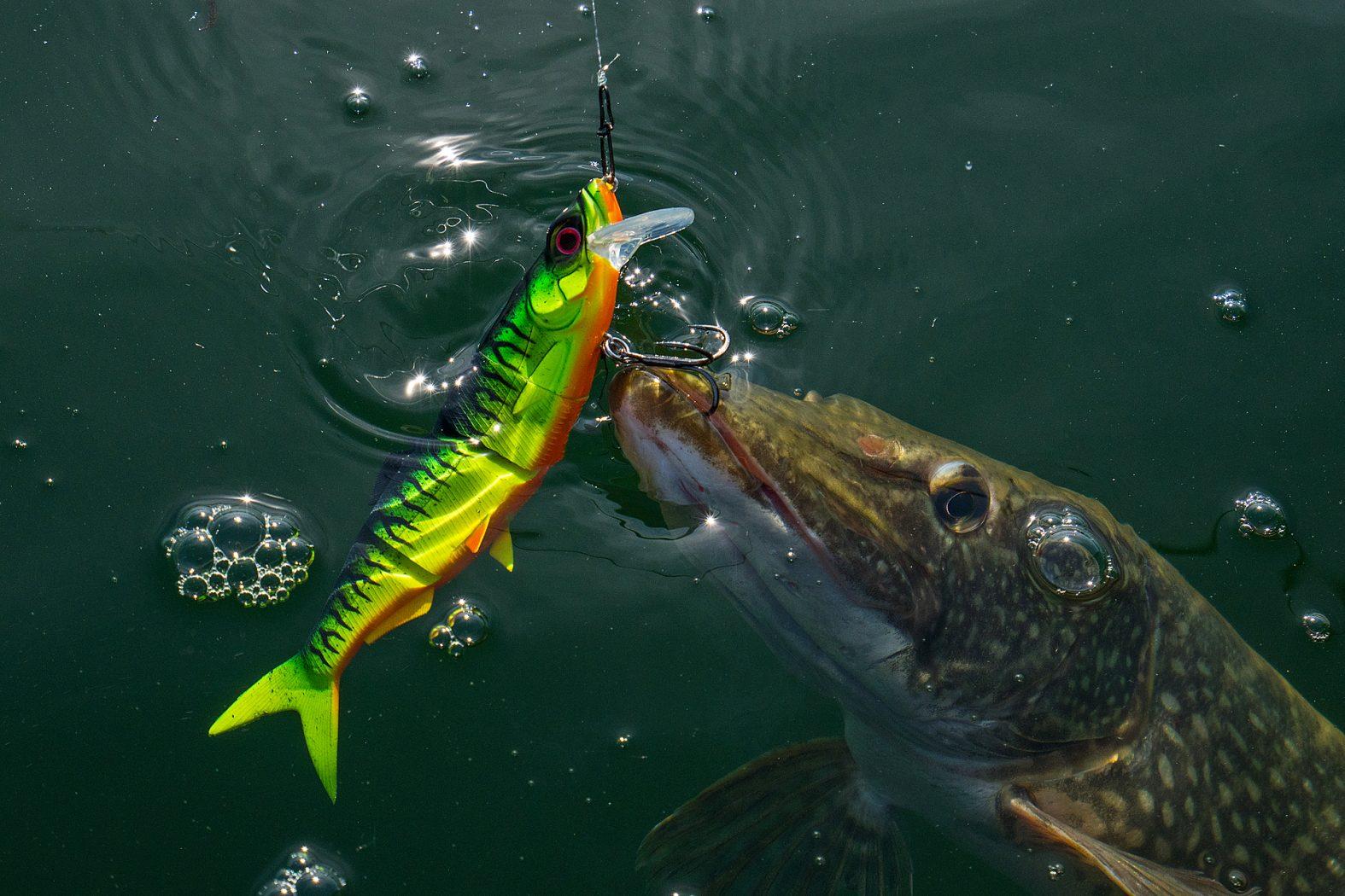 Profi Blinker Spinner Jig 10,13,16,19 Gramm Zocker toll gemacht Fisch-Colors