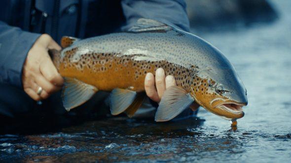 Film übers Fliegenfischen