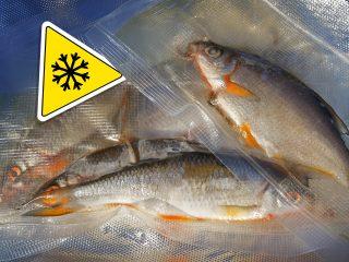 Köderfische einfrieren