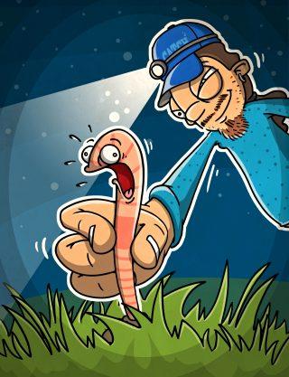 Tauwürmer fangen