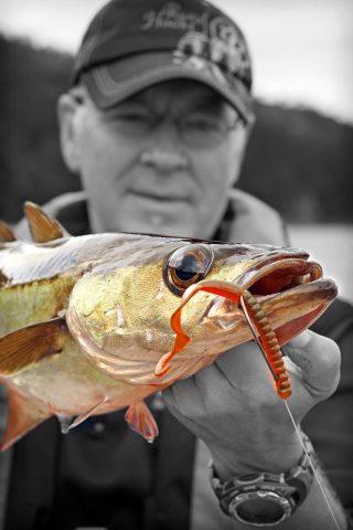 Pollack angeln mit Gummiwurm