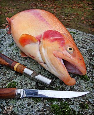 Fisch richtig töten