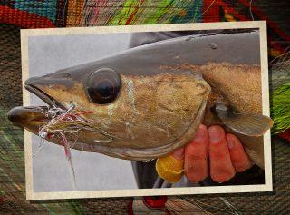Fliegenfischen auf Pollack