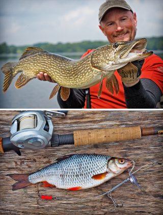 Hechtangeln mit Schleppsystem und Köderfisch