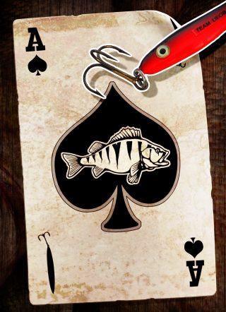 Mit Zocker angeln auf Barsch