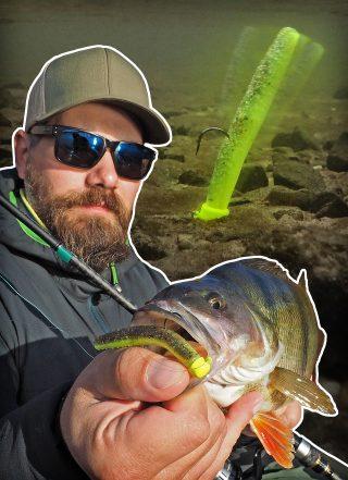 Barsch angeln mit dem Ned Rig