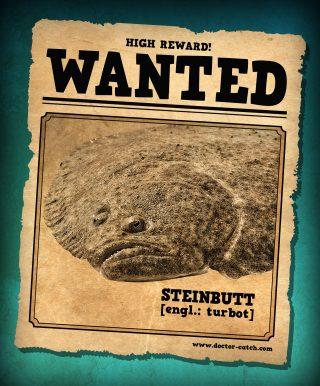 Steinbutt Steckbrief